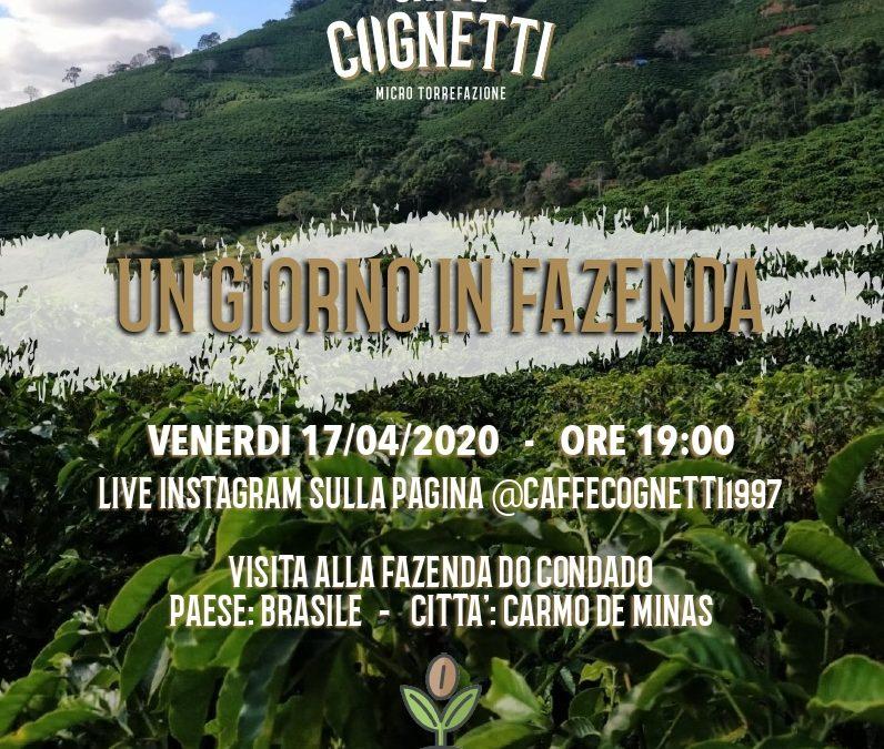 Instagram Live: Viaggio digitale nelle piantagioni di caffè
